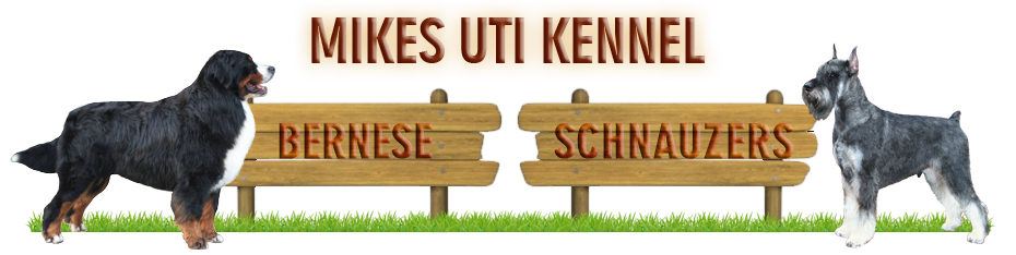 Mikes uti kennel