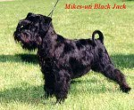 Ch. Mikes-uti Black Jack