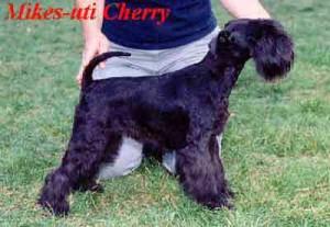 Mikes-uti Cherry