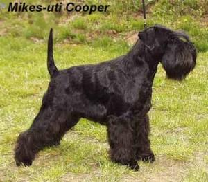 Multi Ch. Mikes-uti Cooper