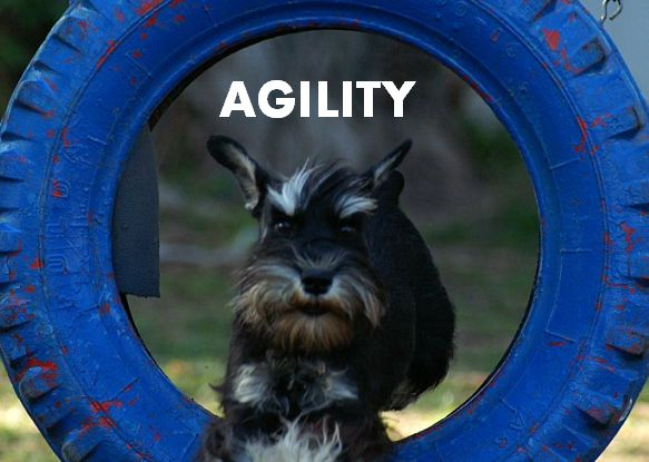 Agility: Szilvi with Manu and Moby Dick